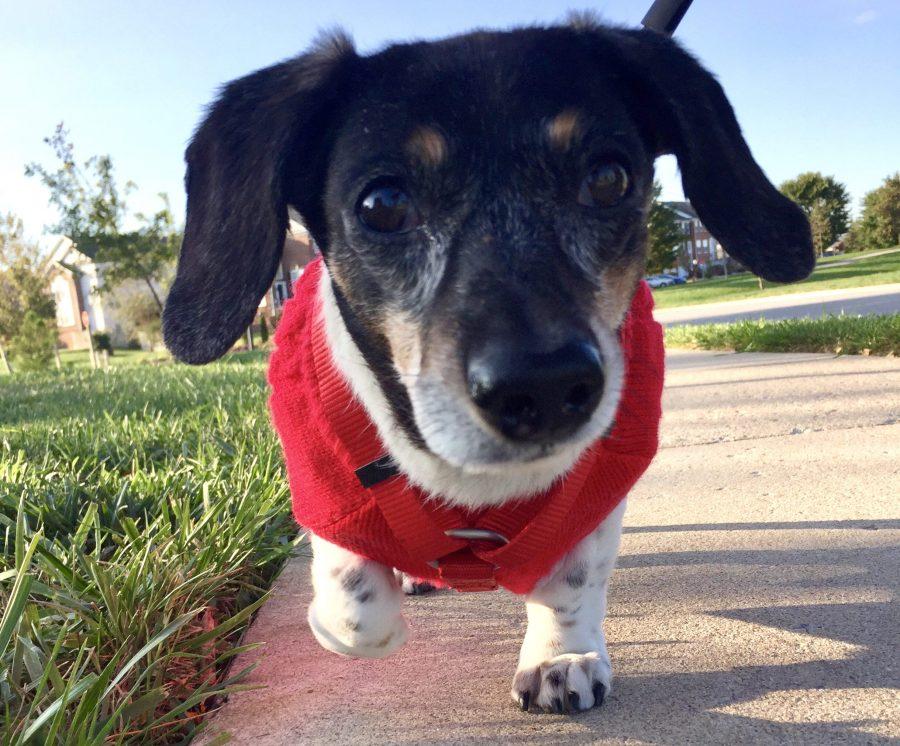 Dedications | Animal Cancer Foundation